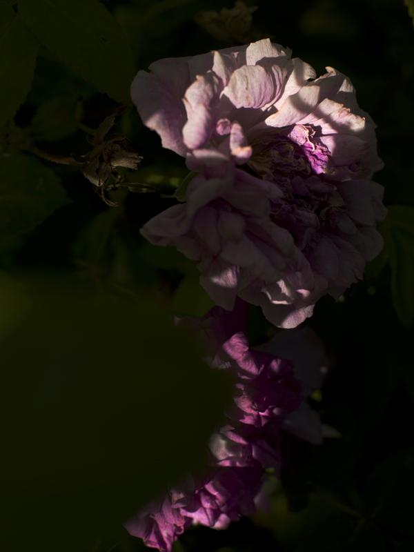YVES TREMORIN,  rose 2014 Courtesy of the artist