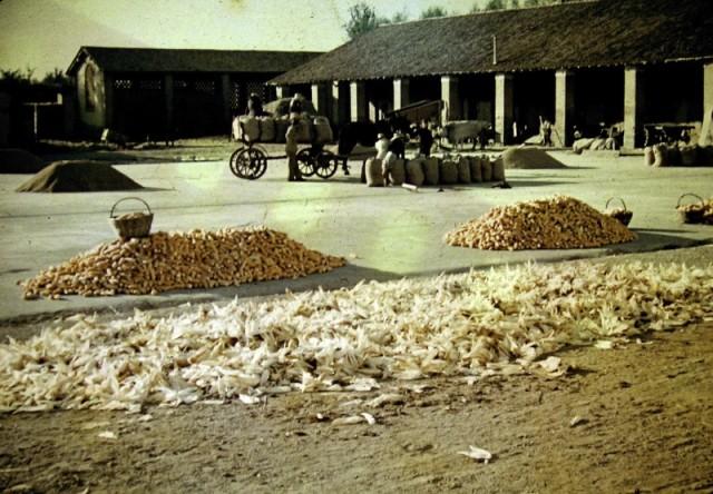 Alberto Albertini, L'aia della certosa, 1943