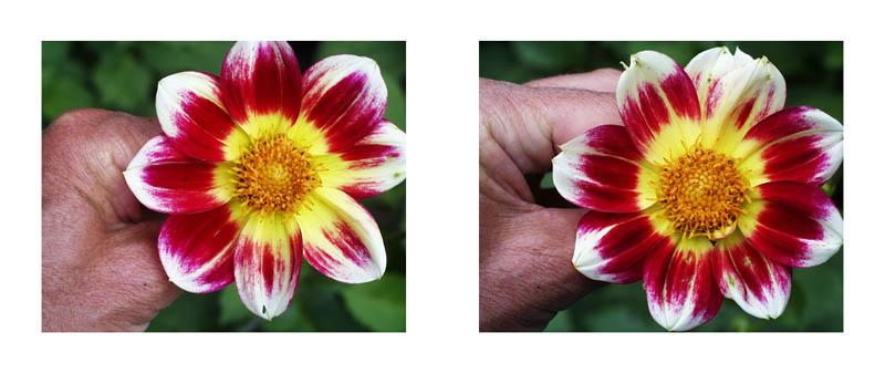 Phénomènes    #6       1998    2 x (84 x 104) cm JEAN-LOUIS GARNELL