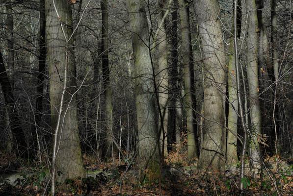 Sans Titre #7   2010   2 x (120 x 150) cm JEAN LOUIS GARNELL