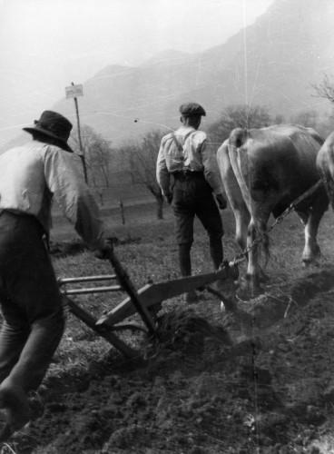 Besano 1939 plow002