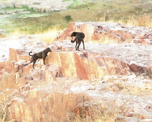g-raja-dogs